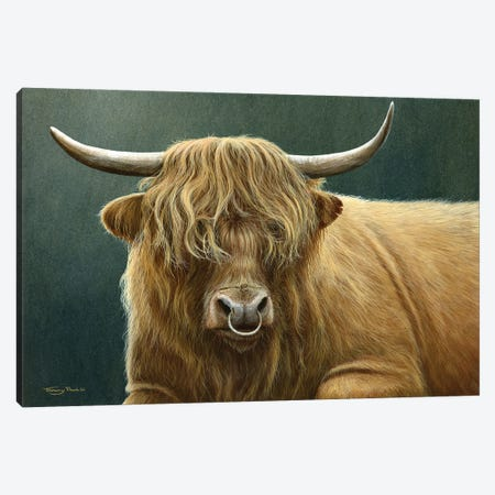 Highland Bull Canvas Print #JYP28} by Jeremy Paul Art Print