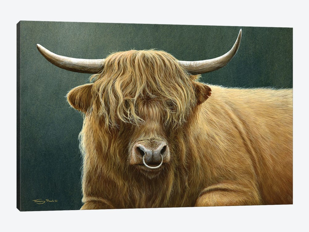 Highland Bull by Jeremy Paul 1-piece Art Print