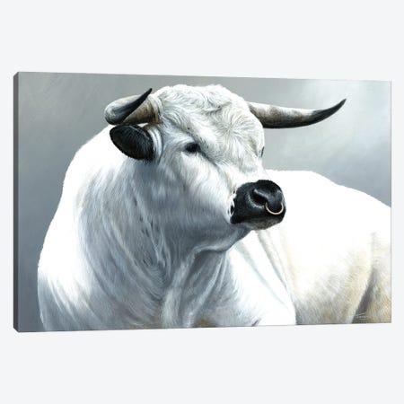 White Park Bull Canvas Print #JYP29} by Jeremy Paul Canvas Art Print