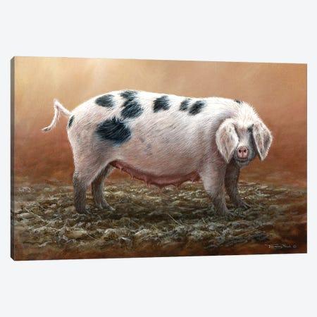 Gloucester Old Spot Canvas Print #JYP30} by Jeremy Paul Canvas Art