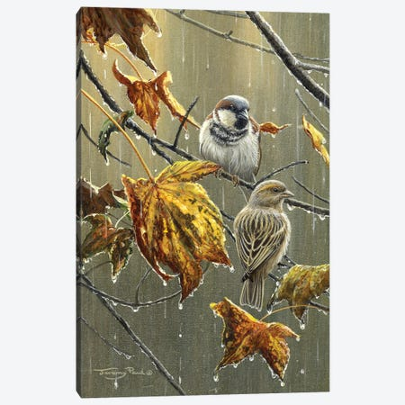 Sparrows In The Rain Canvas Print #JYP34} by Jeremy Paul Canvas Art Print
