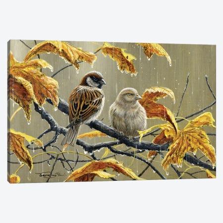 Rainy Days - Sparrows Canvas Print #JYP36} by Jeremy Paul Canvas Art Print