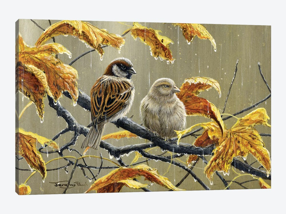 Rainy Days - Sparrows by Jeremy Paul 1-piece Canvas Wall Art