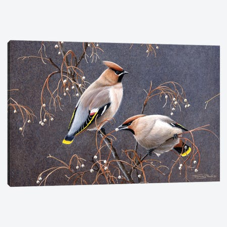 Waxwings Canvas Print #JYP37} by Jeremy Paul Art Print