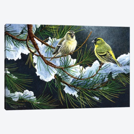 Siskins. Canvas Print #JYP38} by Jeremy Paul Canvas Artwork