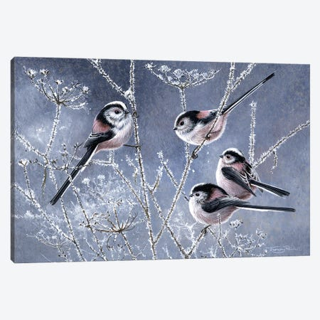 Frosty Morning - Long Tailed Tits Canvas Print #JYP39} by Jeremy Paul Canvas Artwork