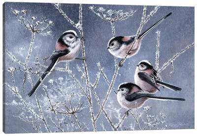 Frosty Morning - Long Tailed Tits Canvas Art Print