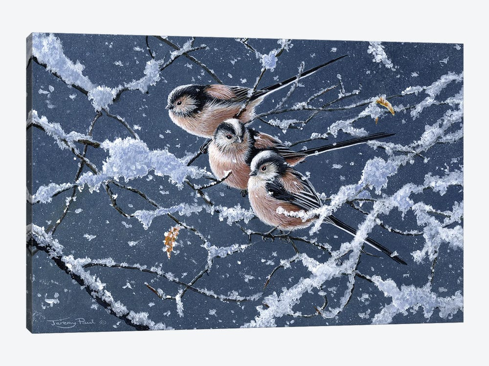 Trio - Long Tailed Tits by Jeremy Paul 1-piece Art Print