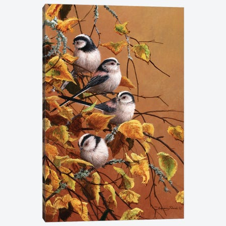 Family Group - Long Tailed Tits Canvas Print #JYP41} by Jeremy Paul Canvas Print