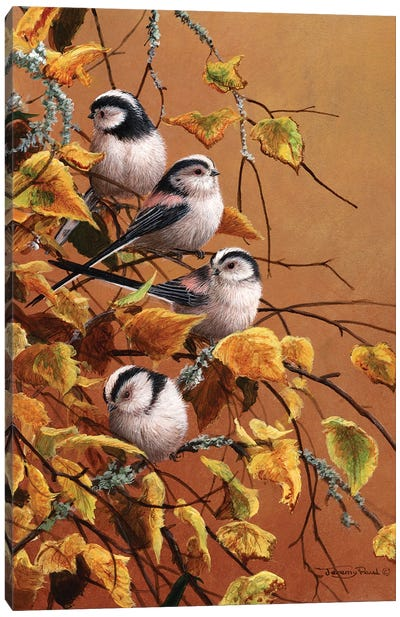 Family Group - Long Tailed Tits Canvas Art Print