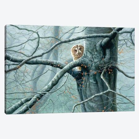 Misty Encounter - Tawny Owl Canvas Print #JYP42} by Jeremy Paul Canvas Art Print