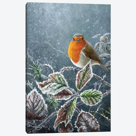Touch Of Frost - Robin Canvas Print #JYP43} by Jeremy Paul Art Print