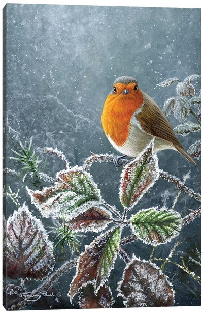 Touch Of Frost - Robin Canvas Art Print