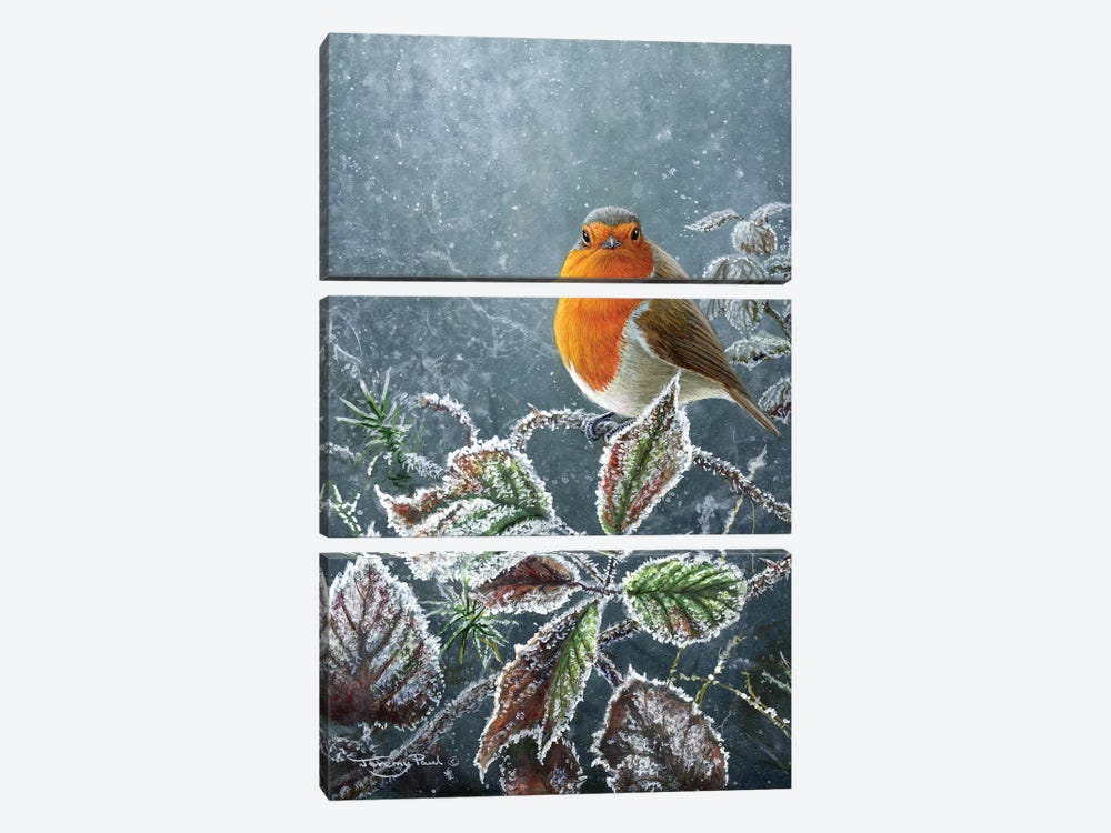Touch Of Frost - Robin by Jeremy Paul 3-piece Canvas Wall Art