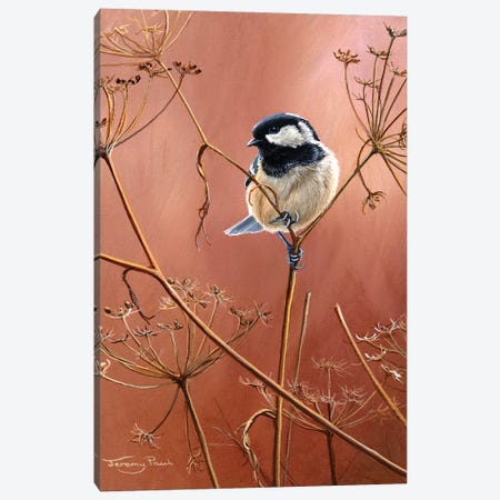 Coal Tit Canvas Print #JYP44} by Jeremy Paul Canvas Artwork