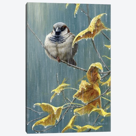 Heavy Rain - Sparrow Canvas Print #JYP48} by Jeremy Paul Art Print
