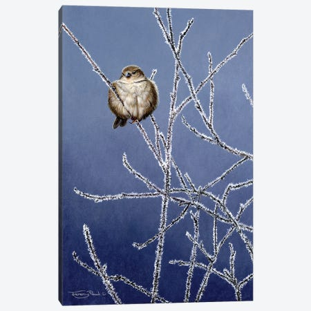 Frosted Branches - Sparrow Canvas Print #JYP49} by Jeremy Paul Canvas Print