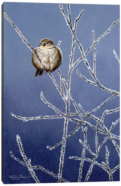 Frosted Branches - Sparrow Canvas Art Print