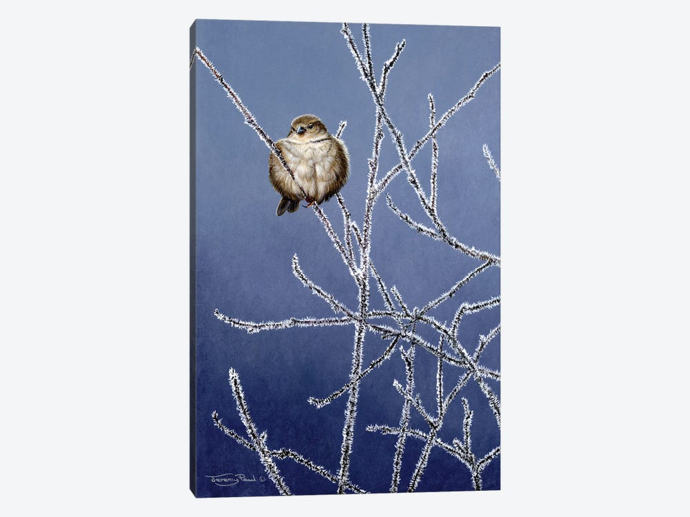 Frosted Branches - Sparrow by Jeremy Paul 1-piece Canvas Artwork