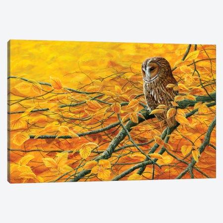 Golden Light Tawny Owl Canvas Print #JYP4} by Jeremy Paul Canvas Artwork