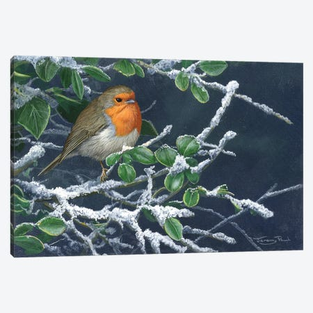 Robin In Winter Canvas Print #JYP50} by Jeremy Paul Canvas Wall Art