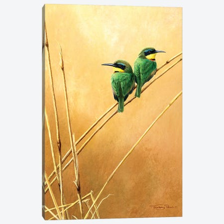 Little Bee -Eaters Canvas Print #JYP51} by Jeremy Paul Canvas Art