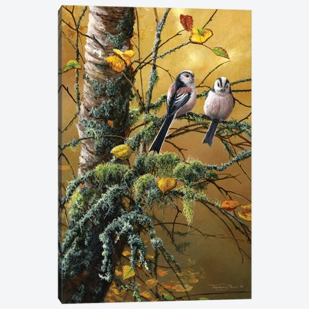 Long Tailed Tits And Lichens Canvas Print #JYP52} by Jeremy Paul Canvas Wall Art