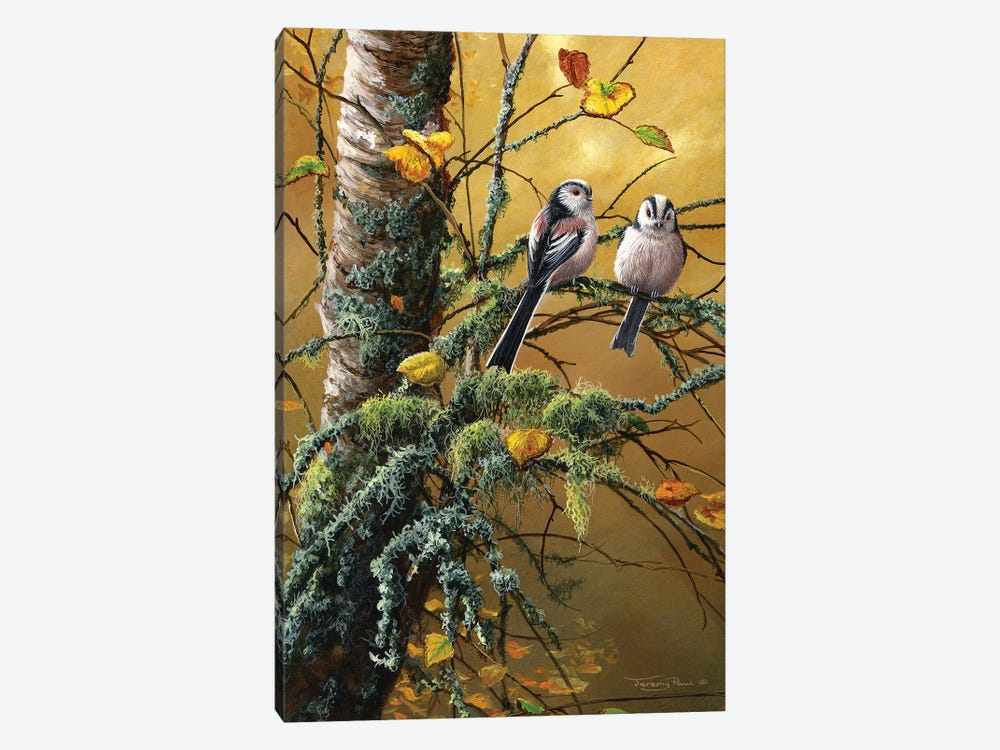 Long Tailed Tits And Lichens by Jeremy Paul 1-piece Canvas Artwork