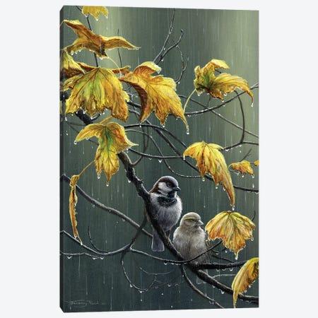 Rain Drops - Sparrows Canvas Print #JYP53} by Jeremy Paul Canvas Artwork
