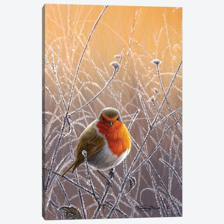 Frosty Glow - Robin Canvas Print #JYP54} by Jeremy Paul Art Print