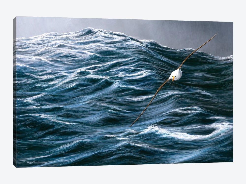 Rolling Ocean - Black Browed Albatross. by Jeremy Paul 1-piece Canvas Print