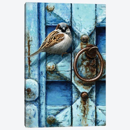 House Sparrow - Blue Door Canvas Print #JYP5} by Jeremy Paul Canvas Wall Art