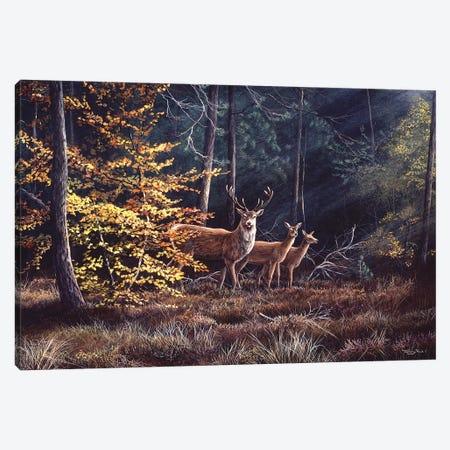 Autumn Flame Canvas Print #JYP61} by Jeremy Paul Art Print