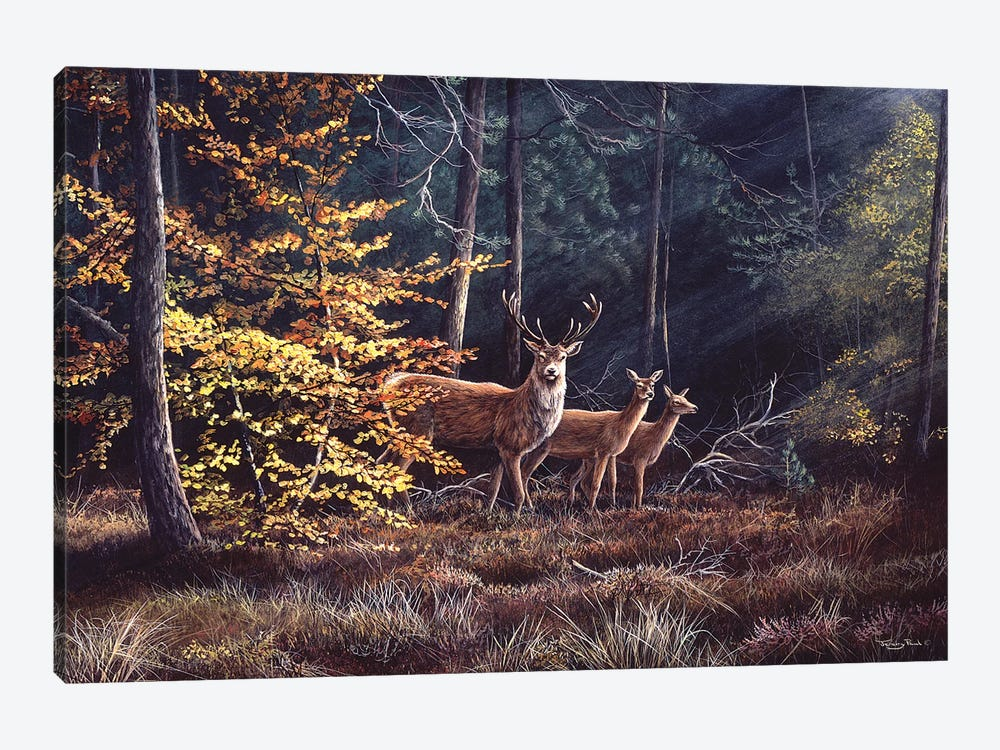Autumn Flame by Jeremy Paul 1-piece Canvas Wall Art