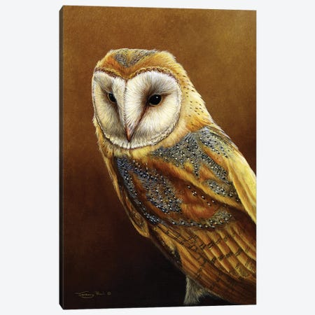 Roosting Place - Barn Owl Canvas Print #JYP63} by Jeremy Paul Canvas Art Print