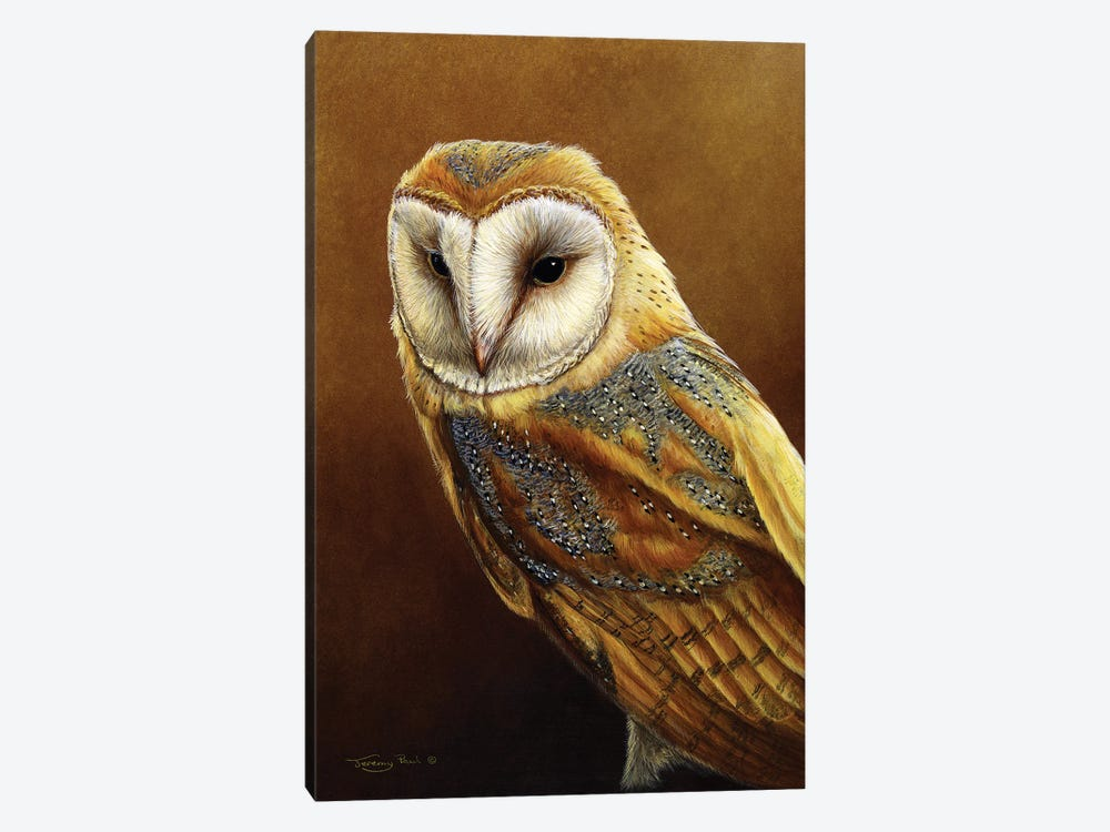 Roosting Place - Barn Owl by Jeremy Paul 1-piece Canvas Artwork