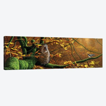 Mobbed - Tawny Owl And Coal Tit Canvas Print #JYP64} by Jeremy Paul Canvas Wall Art