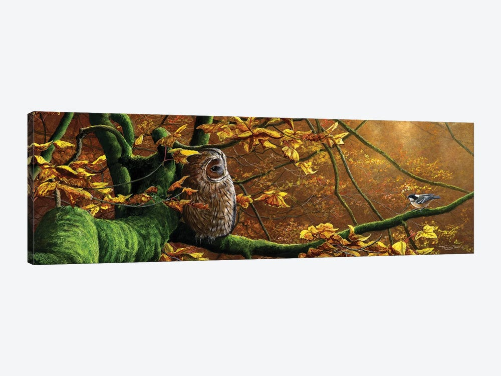 Mobbed - Tawny Owl And Coal Tit by Jeremy Paul 1-piece Canvas Art Print