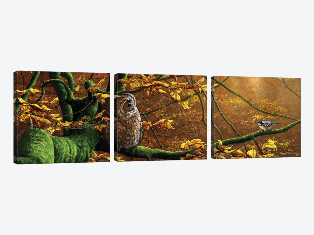 Mobbed - Tawny Owl And Coal Tit by Jeremy Paul 3-piece Canvas Print