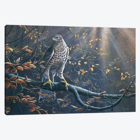 Goshawk Canvas Print #JYP67} by Jeremy Paul Canvas Wall Art