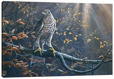 Goshawk Canvas Art Print