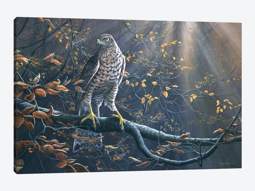 Goshawk by Jeremy Paul 1-piece Canvas Art