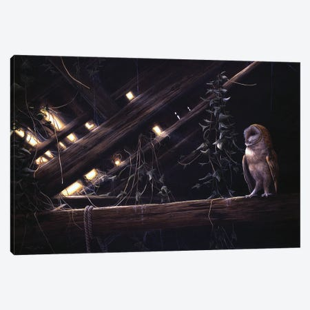 Barn Owl Canvas Print #JYP68} by Jeremy Paul Canvas Print