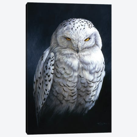 Spirit Of The North - Snowy Owl Canvas Print #JYP70} by Jeremy Paul Canvas Artwork