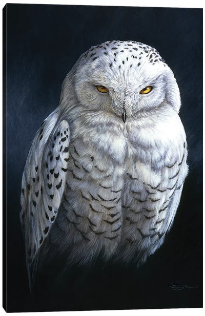 Spirit Of The North - Snowy Owl Canvas Art Print
