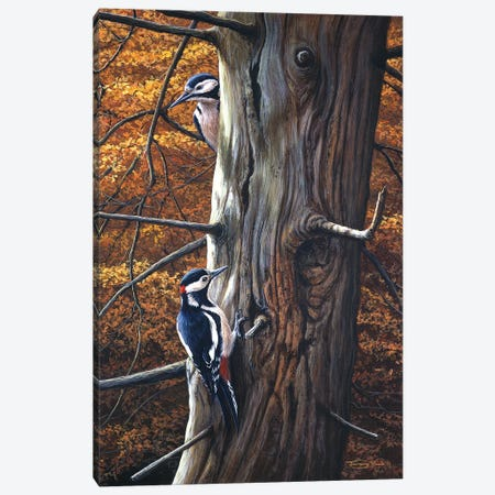 Great Spotted Woodpeckers Canvas Print #JYP75} by Jeremy Paul Art Print