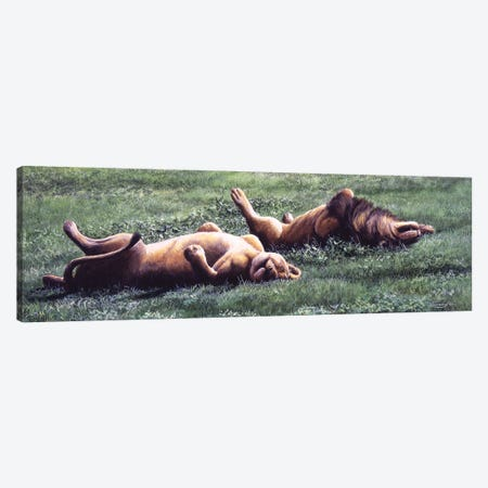 Synchronised Lions Canvas Print #JYP76} by Jeremy Paul Art Print