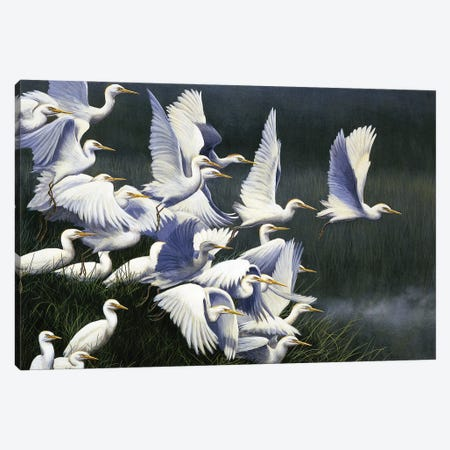 Flight Of Egrets Canvas Print #JYP77} by Jeremy Paul Art Print