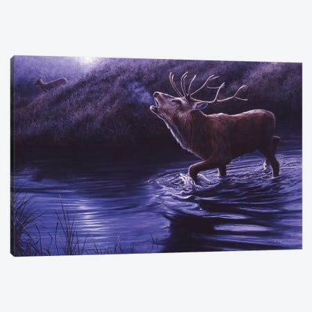 Moonlight Roar - Red Deer Canvas Print #JYP81} by Jeremy Paul Canvas Print