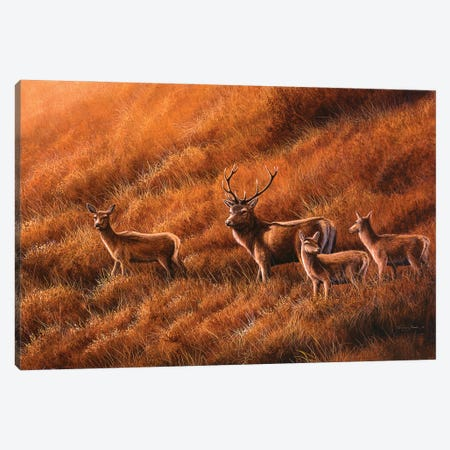 Autumn Hill - Stag And Hinds Canvas Print #JYP82} by Jeremy Paul Art Print